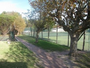 plumstead-tennis-club_tree-lined-walkway
